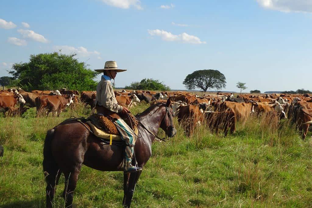 Gaucho Pampa Argentina