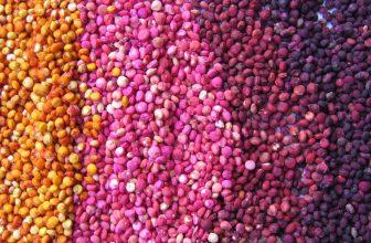 Quinoa Ricette e curiosità – 4 sfiziose ricette con Quinoa